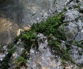 Michelangelo Einstieg auf dem Felsvorbau