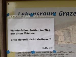 """Falkenbrut in der Route"""" Weg der alten Männer"""" Rote Wand"""